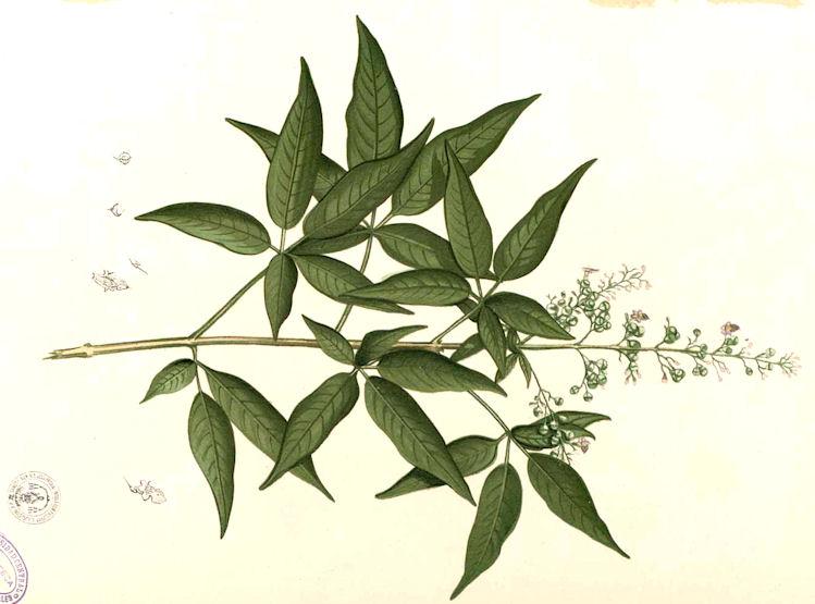 Amarakoa vanauadhivarga ii vers 44 62 mightylinksfo