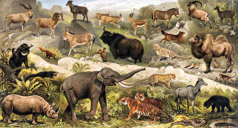 Tierwelt De