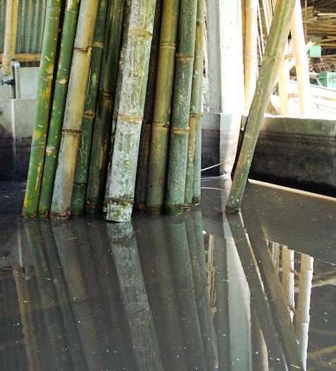 gift gegen bambus bambus ein exot im eigenen garten haus und garten 24 hoher winterharter. Black Bedroom Furniture Sets. Home Design Ideas