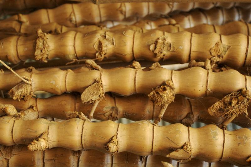 big bamboo intimpiercings arten