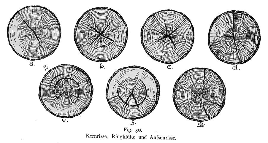 Holz Trocknen Ohne Risse holz als material werkstoffkundliches architektur für die tropen